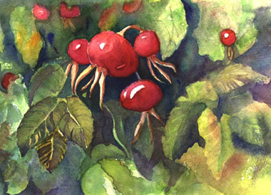 Rose Hip Parade
